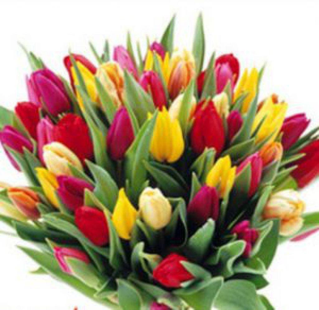 Tulips Send Florist Designed Spring Seasonal Flowewrs To Donetsk